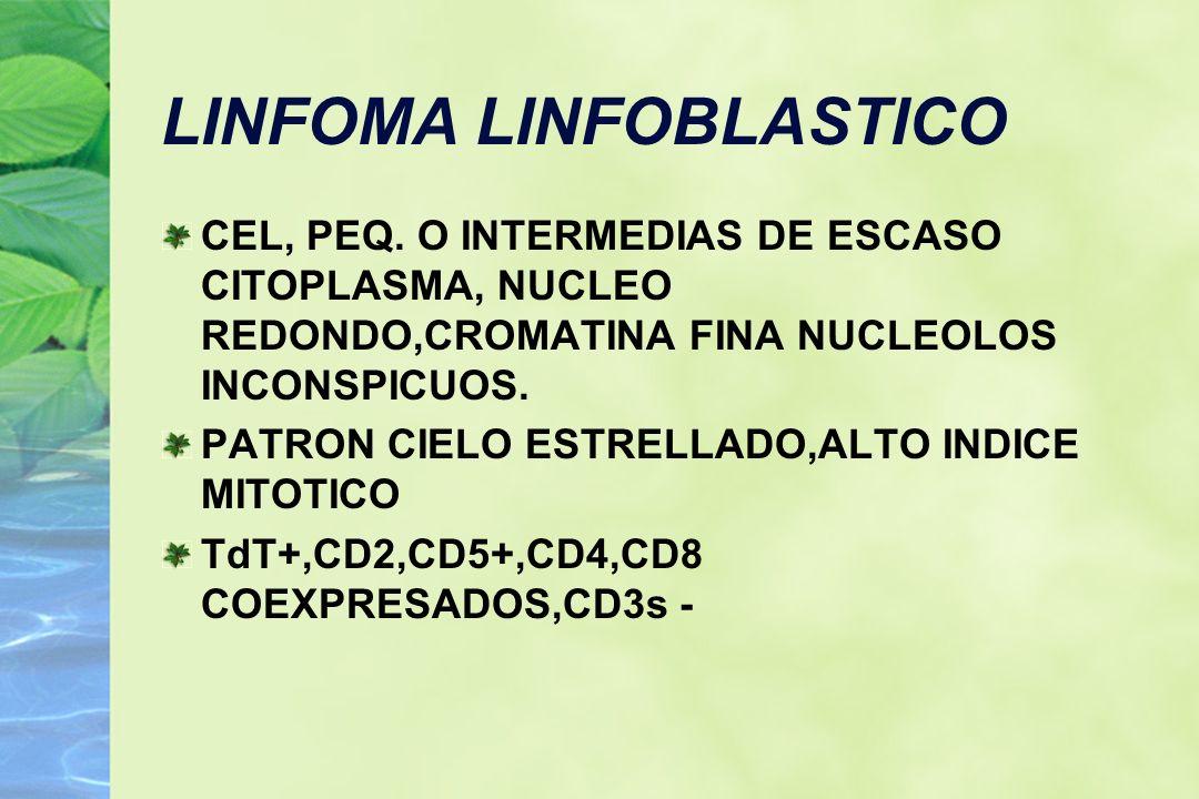 LINFOMA LINFOBLASTICO CEL, PEQ. O INTERMEDIAS DE ESCASO CITOPLASMA, NUCLEO REDONDO,CROMATINA FINA NUCLEOLOS INCONSPICUOS. PATRON CIELO ESTRELLADO,ALTO