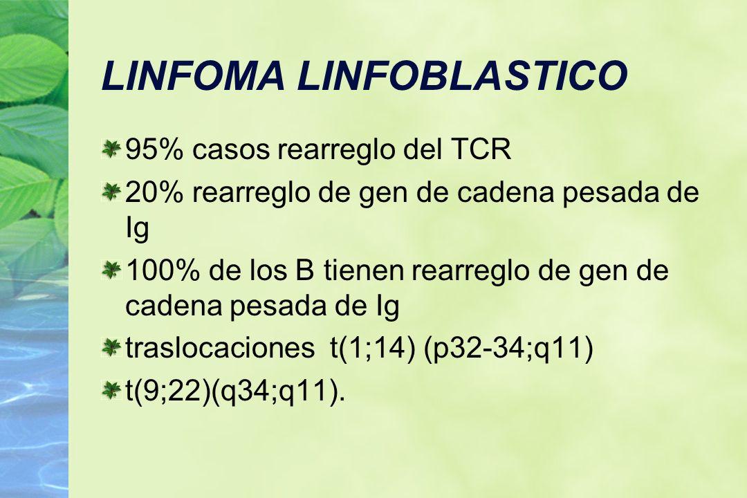 LINFOMA LINFOBLASTICO 95% casos rearreglo del TCR 20% rearreglo de gen de cadena pesada de Ig 100% de los B tienen rearreglo de gen de cadena pesada d