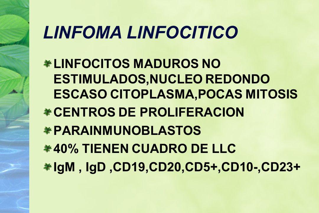 LINFOMA LINFOCITICO LINFOCITOS MADUROS NO ESTIMULADOS,NUCLEO REDONDO ESCASO CITOPLASMA,POCAS MITOSIS CENTROS DE PROLIFERACION PARAINMUNOBLASTOS 40% TI