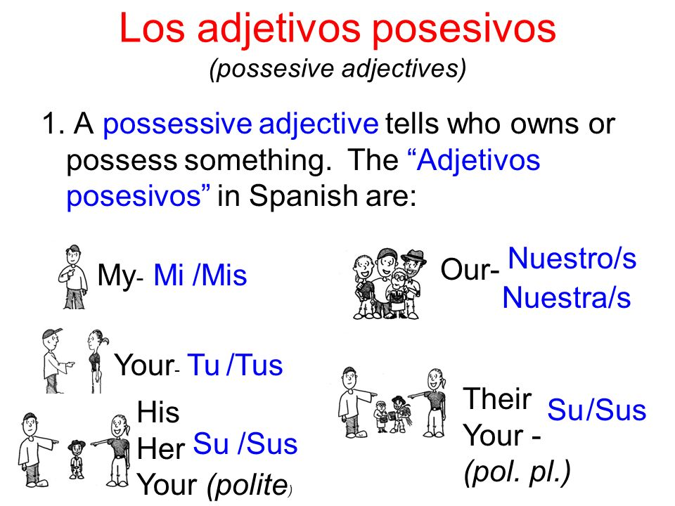 Los adjetivos posesivos (possesive adjectives) 1. A possessive adjective tells who owns or possess something. The Adjetivos posesivos in Spanish are: