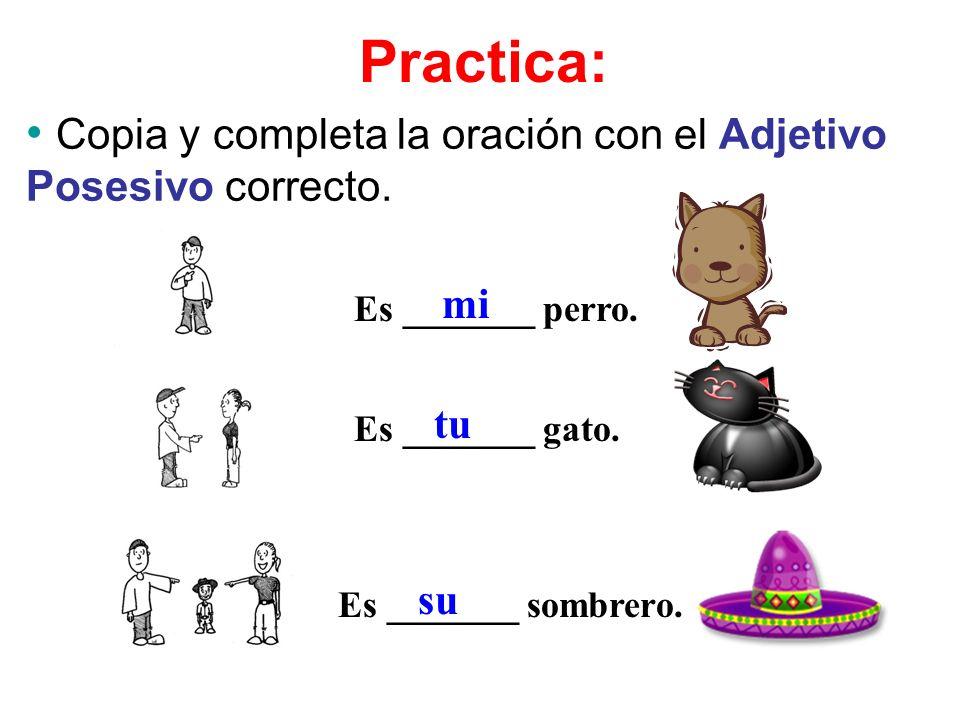 Copia y completa la oración con el Adjetivo Posesivo correcto. Es _______ perro. Es _______ gato. Es _______ sombrero. mi tu su Practica: