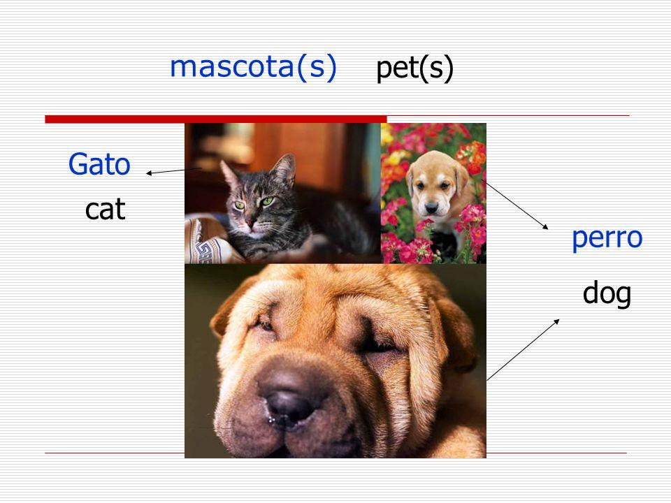 Más vocabulario gatito(a) – kitten Perrito(a)-Puppy único(a) -Only Menor-younger Mayor Completa la hoja distribuida Tarea # 19