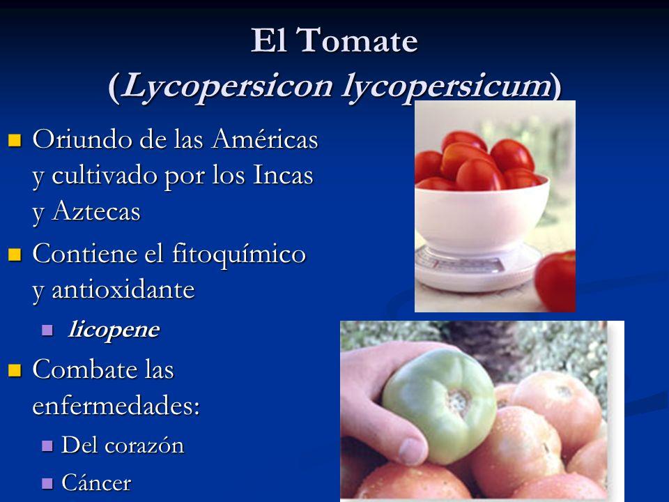 El Tomate (Lycopersicon lycopersicum) Oriundo de las Américas y cultivado por los Incas y Aztecas Oriundo de las Américas y cultivado por los Incas y