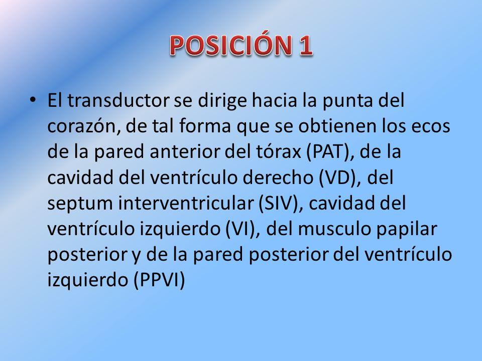 El transductor se dirige hacia la punta del corazón, de tal forma que se obtienen los ecos de la pared anterior del tórax (PAT), de la cavidad del ven