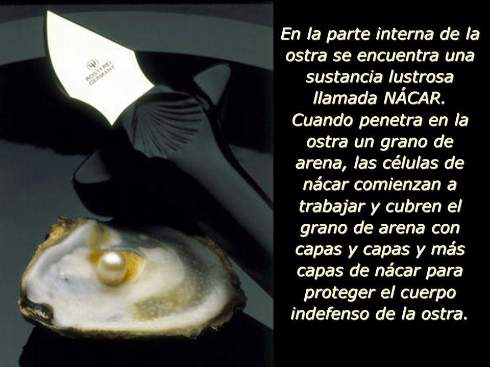 En la parte interna de la ostra se encuentra una sustancia lustrosa llamada NÁCAR.