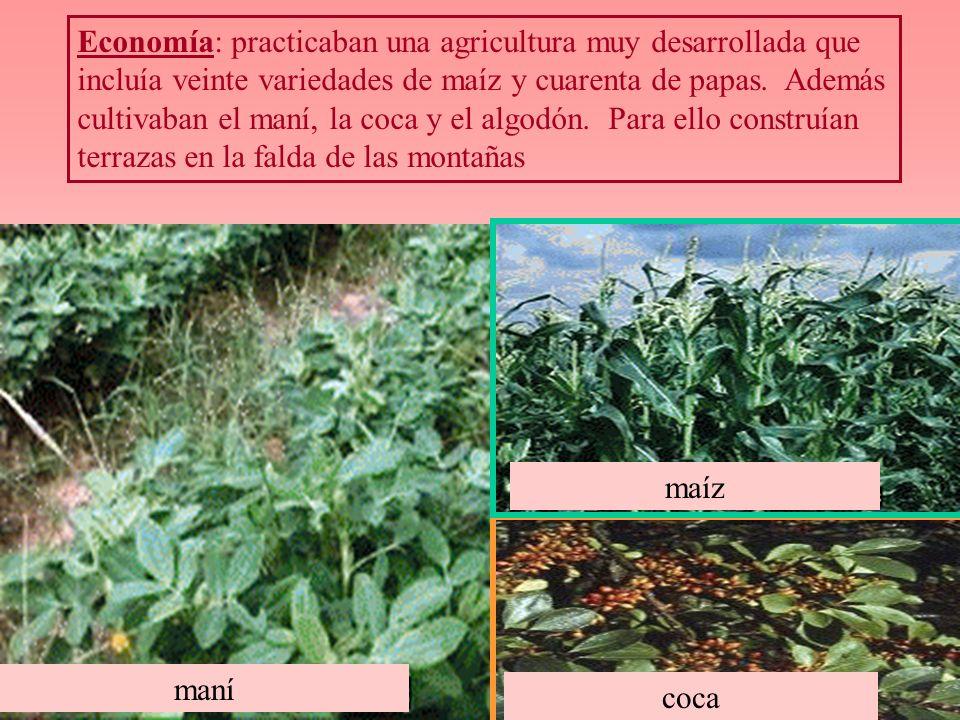 Economía: practicaban una agricultura muy desarrollada que incluía veinte variedades de maíz y cuarenta de papas. Además cultivaban el maní, la coca y