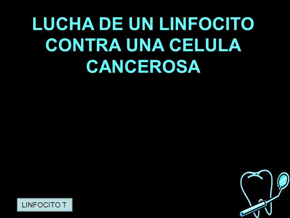 PATRICIA RAMOS LUCHA DE UN LINFOCITO CONTRA UNA CELULA CANCEROSA LINFOCITO T