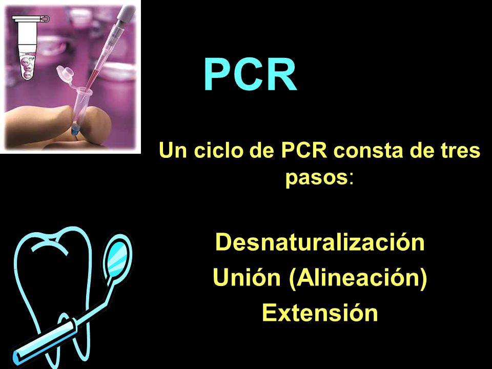 PCR Un ciclo de PCR consta de tres pasos: Desnaturalización Unión (Alineación) Extensión