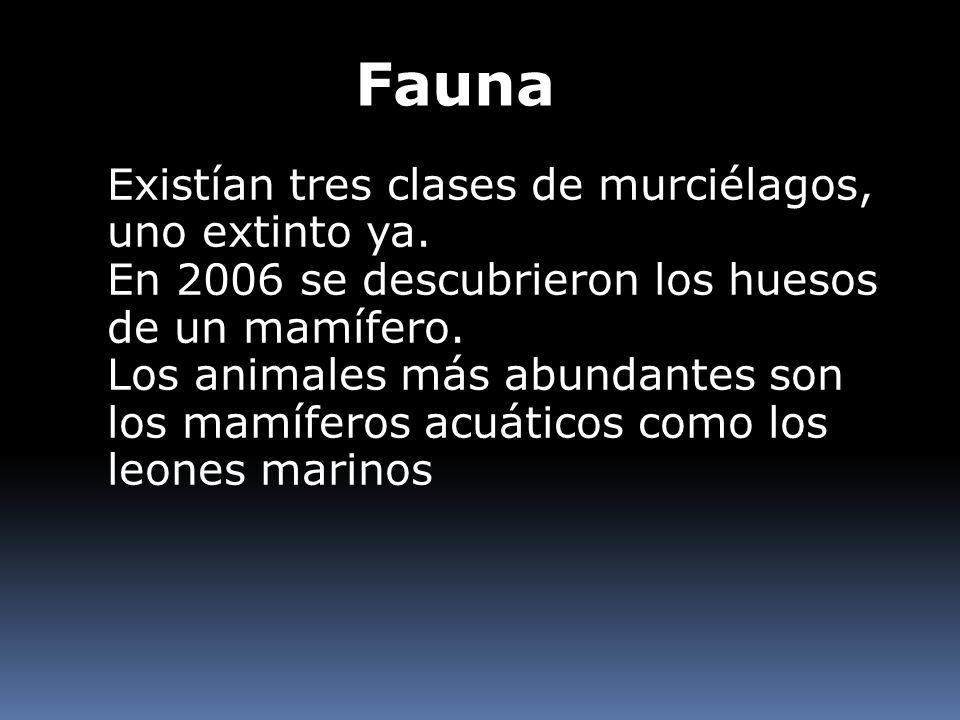 Fauna Existían tres clases de murciélagos, uno extinto ya. En 2006 se descubrieron los huesos de un mamífero. Los animales más abundantes son los mamí