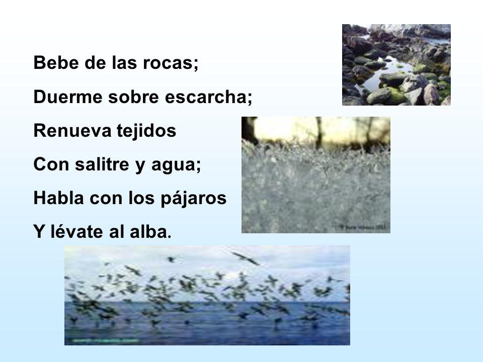Bebe de las rocas; Duerme sobre escarcha; Renueva tejidos Con salitre y agua; Habla con los pájaros Y lévate al alba.
