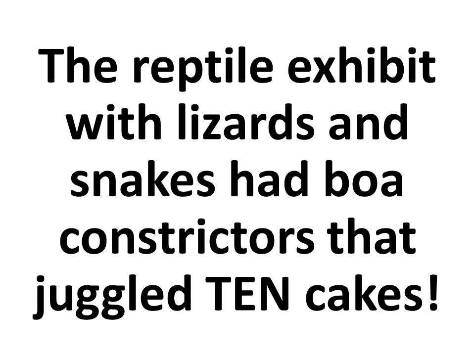 La exhibición de reptiles con lagartijas y culebras tenía boas constrictor ¡que hacían malabarismos con DIEZ pasteles!