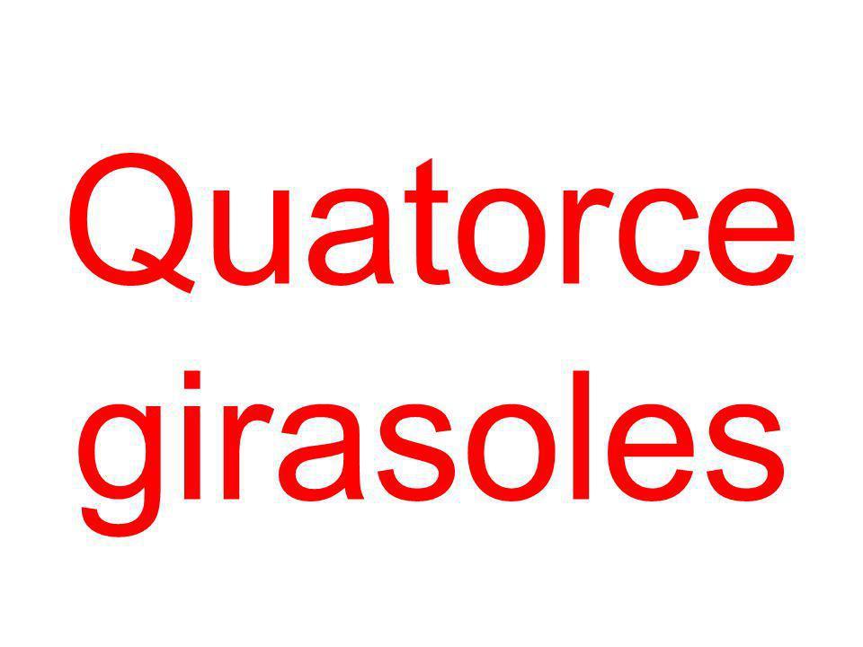 Quatorce girasoles