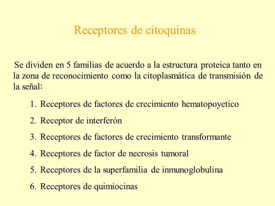 Receptores de citoquinas Se dividen en 5 familias de acuerdo a la estructura proteica tanto en la zona de reconocimiento como la citoplasmática de tra