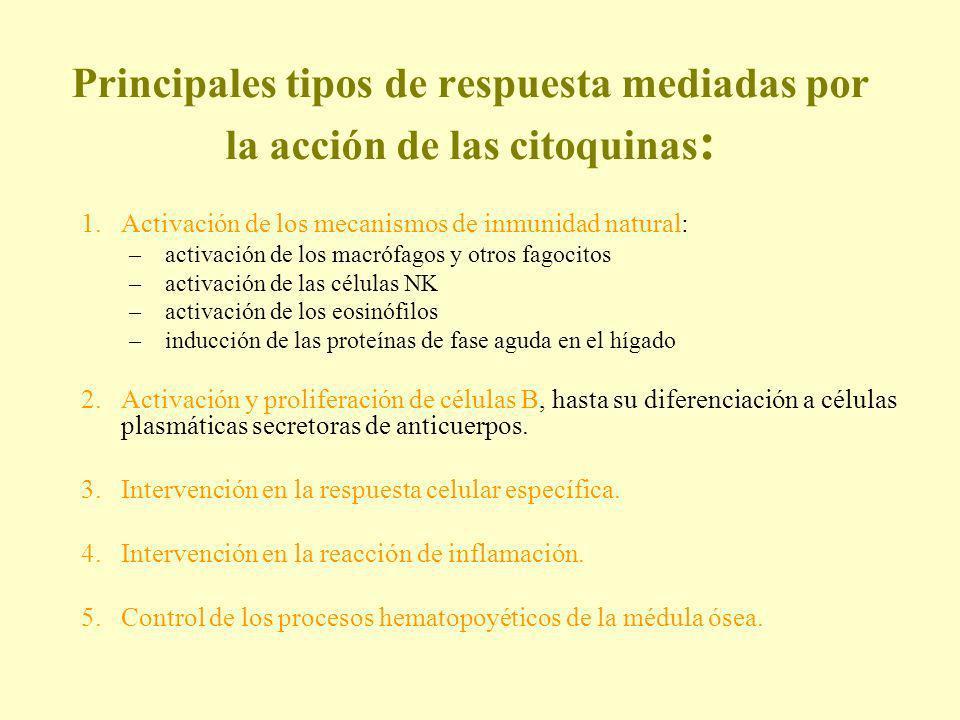 Principales tipos de respuesta mediadas por la acción de las citoquinas : 1.Activación de los mecanismos de inmunidad natural: –activación de los macr