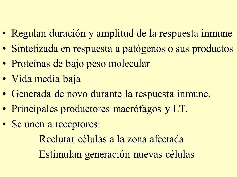 Principales tipos de respuesta mediadas por la acción de las citoquinas : 1.Activación de los mecanismos de inmunidad natural: –activación de los macrófagos y otros fagocitos –activación de las células NK –activación de los eosinófilos –inducción de las proteínas de fase aguda en el hígado 2.Activación y proliferación de células B, hasta su diferenciación a células plasmáticas secretoras de anticuerpos.
