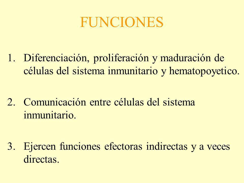 FUNCIONES 1.Diferenciación, proliferación y maduración de células del sistema inmunitario y hematopoyetico. 2.Comunicación entre células del sistema i