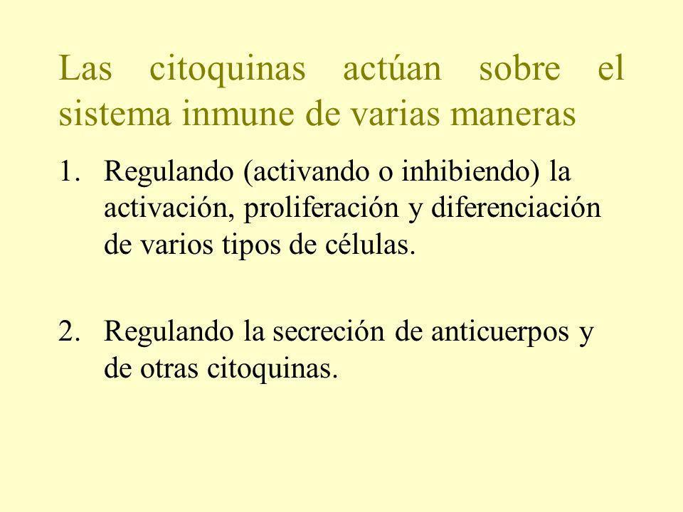 Las citoquinas actúan sobre el sistema inmune de varias maneras 1.Regulando (activando o inhibiendo) la activación, proliferación y diferenciación de