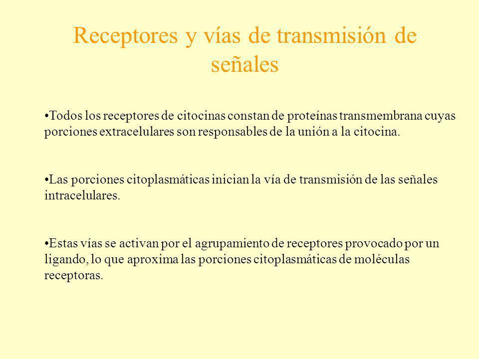 Receptores y vías de transmisión de señales Todos los receptores de citocinas constan de proteínas transmembrana cuyas porciones extracelulares son re