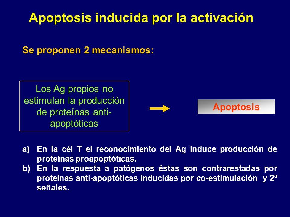Apoptosis inducida por la activación a)En la cél T el reconocimiento del Ag induce producción de proteínas proapoptóticas. b)En la respuesta a patógen