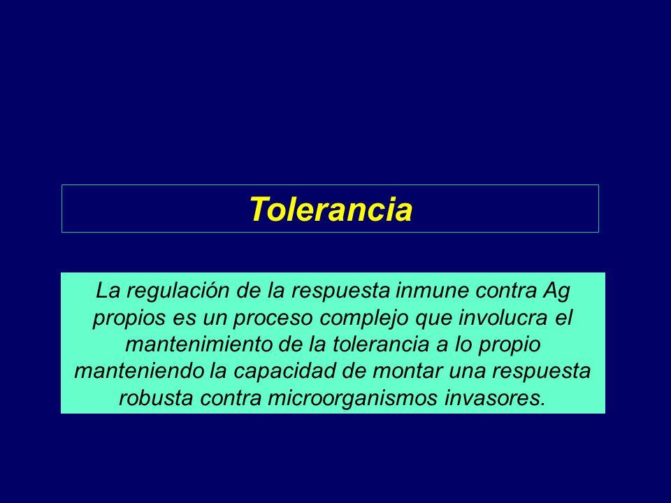 Tolerancia La regulación de la respuesta inmune contra Ag propios es un proceso complejo que involucra el mantenimiento de la tolerancia a lo propio m
