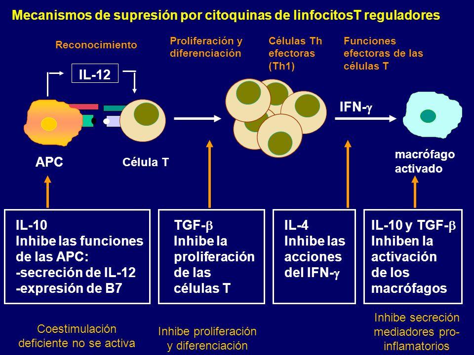 Mecanismos de supresión por citoquinas de linfocitosT reguladores Reconocimiento IL-12 Proliferación y diferenciación Células Th efectoras (Th1) Funci