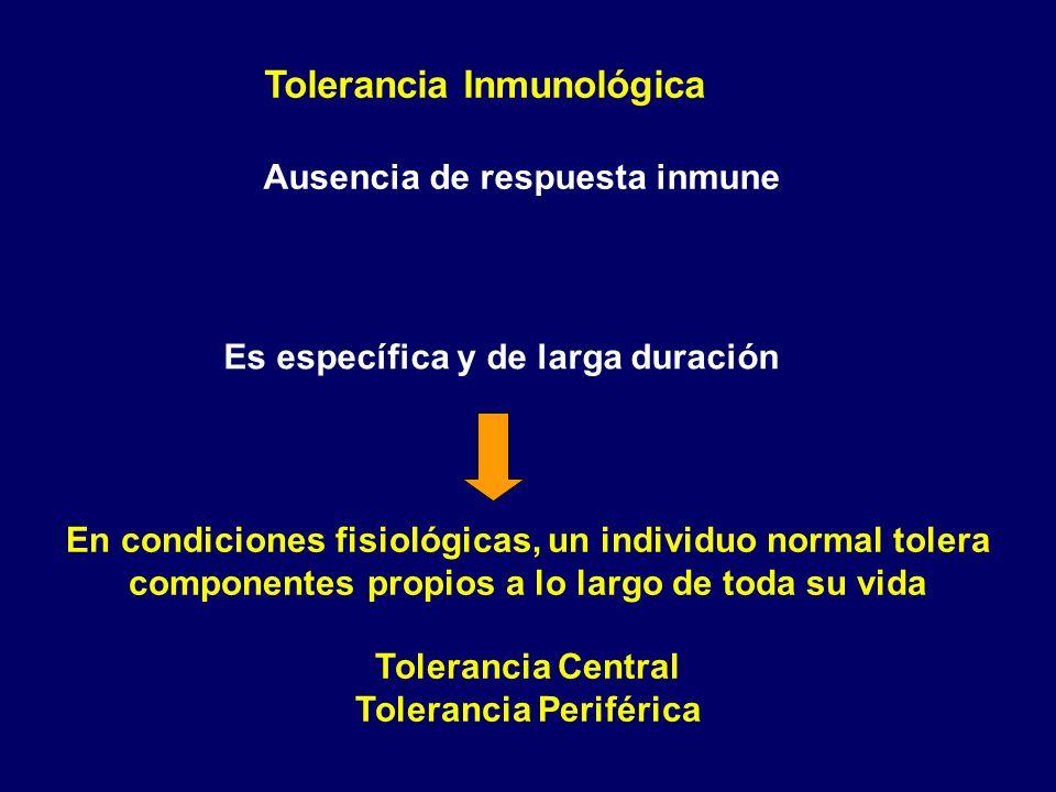 Tolerancia Inmunológica Ausencia de respuesta inmune Es específica y de larga duración En condiciones fisiológicas, un individuo normal tolera compone
