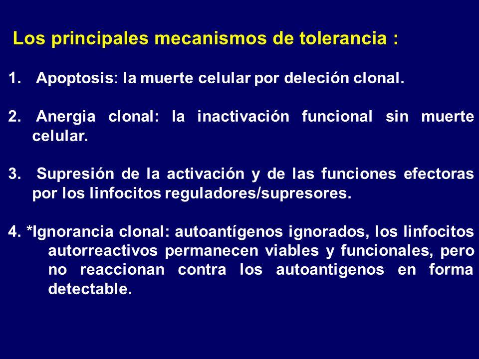 Los principales mecanismos de tolerancia : 1. Apoptosis: la muerte celular por deleción clonal. 2. Anergia clonal: la inactivación funcional sin muert