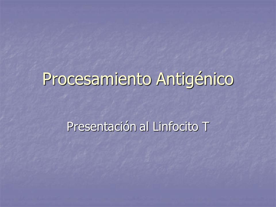 Procesamiento Antigénico Presentación al Linfocito T