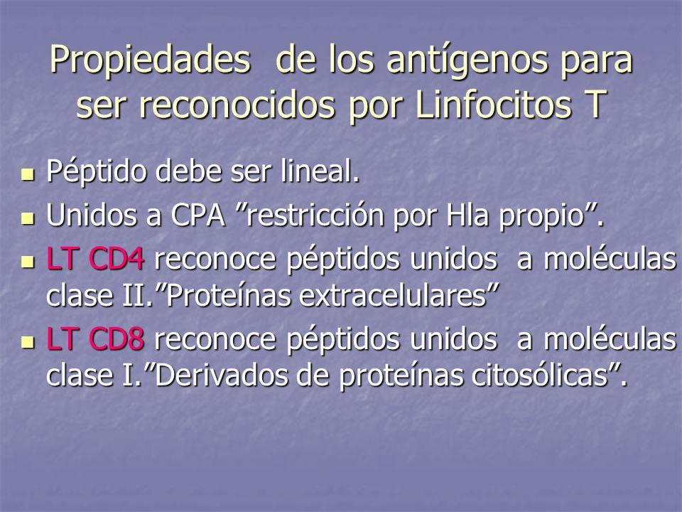 Propiedades de los antígenos para ser reconocidos por Linfocitos T Péptido debe ser lineal. Péptido debe ser lineal. Unidos a CPA restricción por Hla