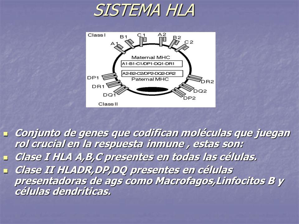 SISTEMA HLA Conjunto de genes que codifican moléculas que juegan rol crucial en la respuesta inmune, estas son: Conjunto de genes que codifican molécu