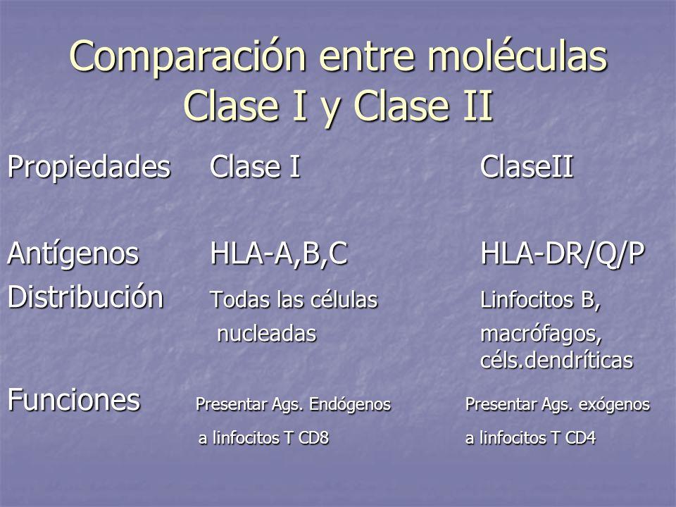 Comparación entre moléculas Clase I y Clase II PropiedadesClase IClaseII AntígenosHLA-A,B,CHLA-DR/Q/P Distribución Todas las célulasLinfocitos B, nucl