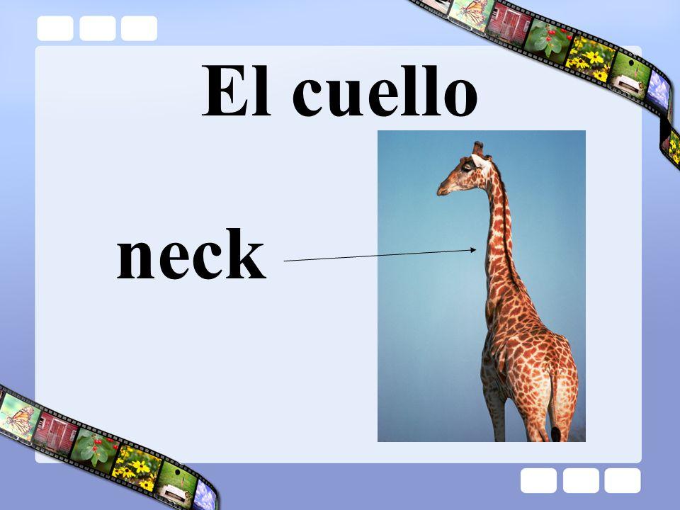El cuello neck