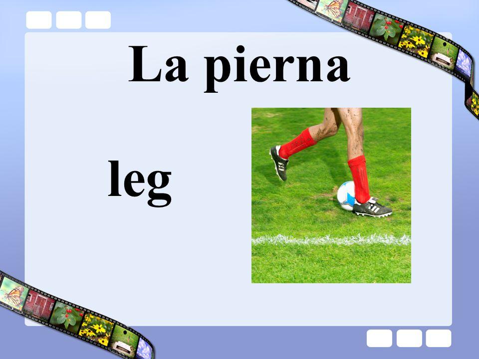 La pierna leg