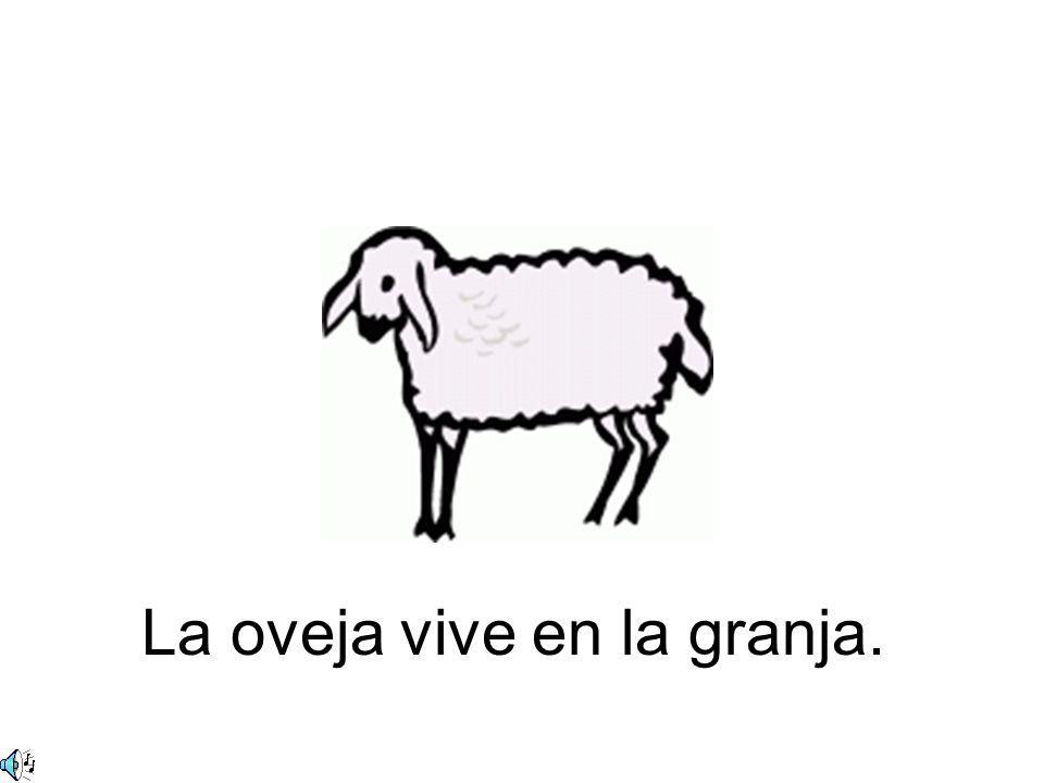 La oveja vive en la granja.