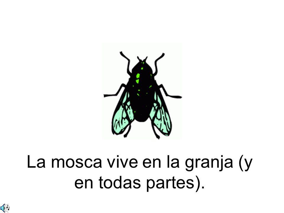 La mosca vive en la granja (y en todas partes).