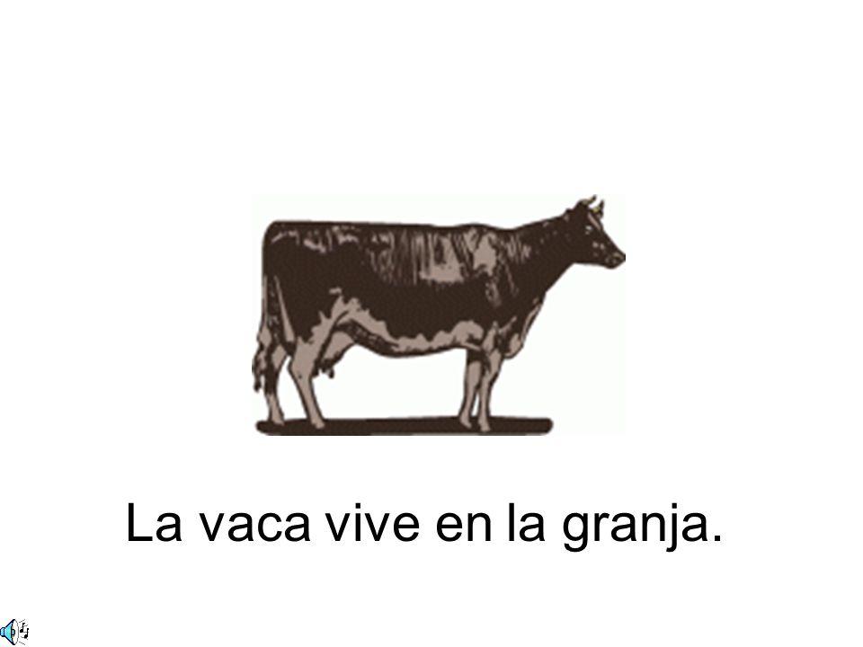 El toro vive en la granja.