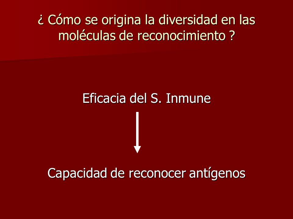 ¿ Cómo se origina la diversidad en las moléculas de reconocimiento ? Eficacia del S. Inmune Capacidad de reconocer antígenos