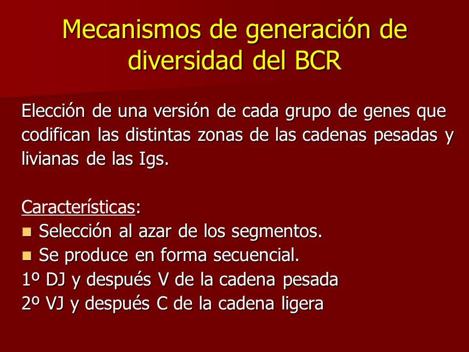 Mecanismos de generación de diversidad del BCR Elección de una versión de cada grupo de genes que codifican las distintas zonas de las cadenas pesadas