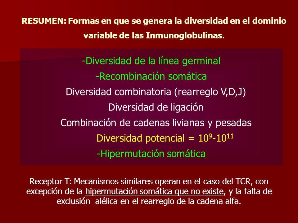 RESUMEN: Formas en que se genera la diversidad en el dominio variable de las Inmunoglobulinas. -Diversidad de la línea germinal -Recombinación somátic