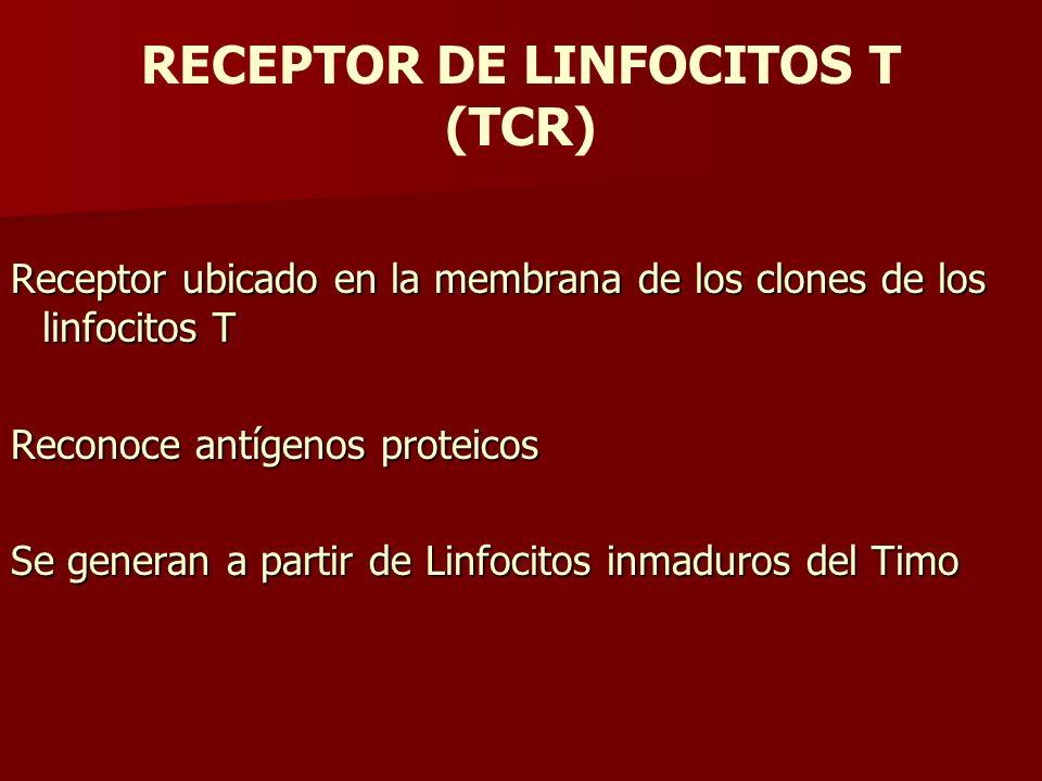 RECEPTOR DE LINFOCITOS T (TCR) Receptor ubicado en la membrana de los clones de los linfocitos T Reconoce antígenos proteicos Se generan a partir de L