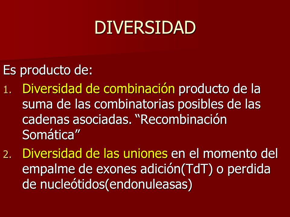 DIVERSIDAD Es producto de: 1. Diversidad de combinación producto de la suma de las combinatorias posibles de las cadenas asociadas. Recombinación Somá