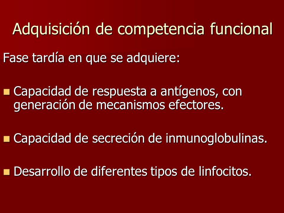 Adquisición de competencia funcional Fase tardía en que se adquiere: Capacidad de respuesta a antígenos, con generación de mecanismos efectores. Capac