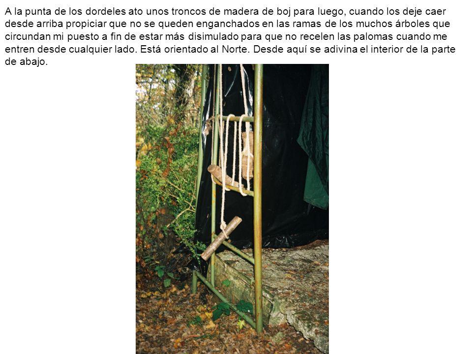 A la punta de los dordeles ato unos troncos de madera de boj para luego, cuando los deje caer desde arriba propiciar que no se queden enganchados en l