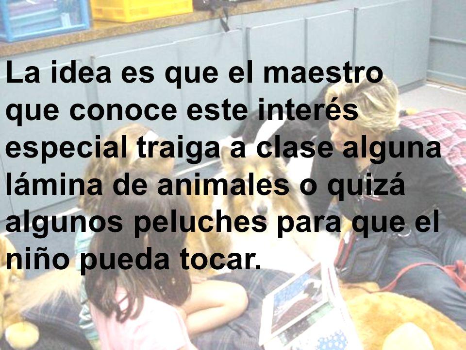La idea es que el maestro que conoce este interés especial traiga a clase alguna lámina de animales o quizá algunos peluches para que el niño pueda to