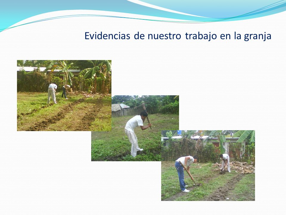 Creación de grupos ecológicos