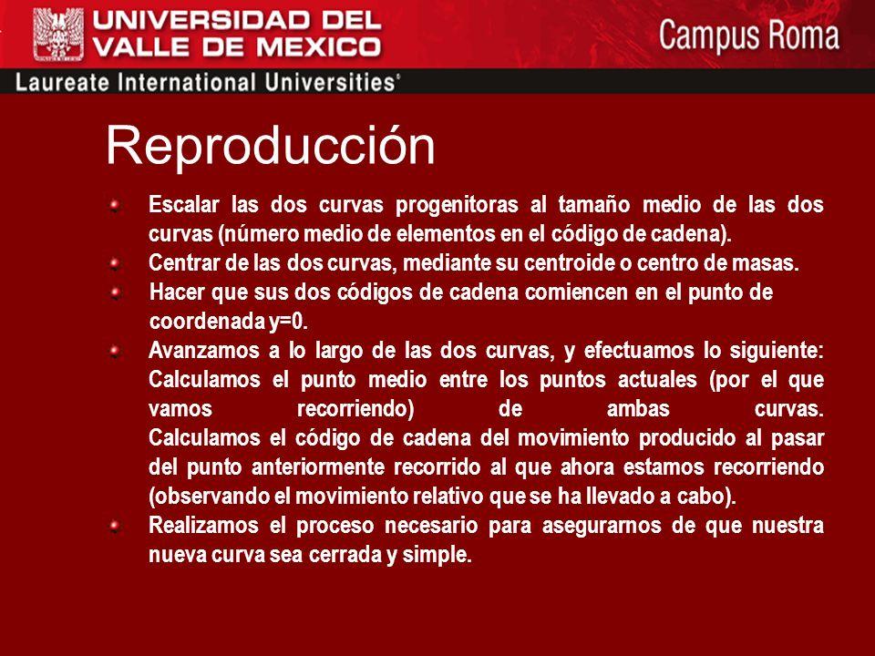 Reproducción ¿En qué consiste? Se trata de simular la reproducción de dos individuos de la población, obteniendo como resultado un nuevo individuo int