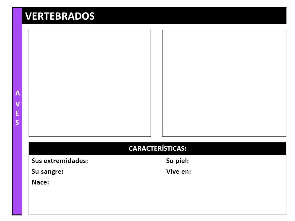 AVESAVES VERTEBRADOS CARACTERÍSTICAS: Sus extremidades: Su sangre: Nace: Su piel: Vive en: