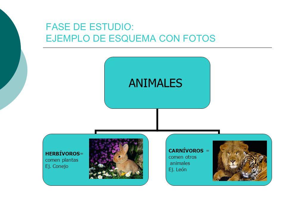 FASE DE ESTUDIO: EJEMPLO DE ESQUEMA CON FOTOS ANIMALES HERBÍVOROS= comen plantas Ej. Conejo CARNÍVOROS = comen otros animales Ej. León