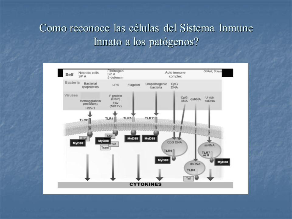 Como reconoce las células del Sistema Inmune Innato a los patógenos?