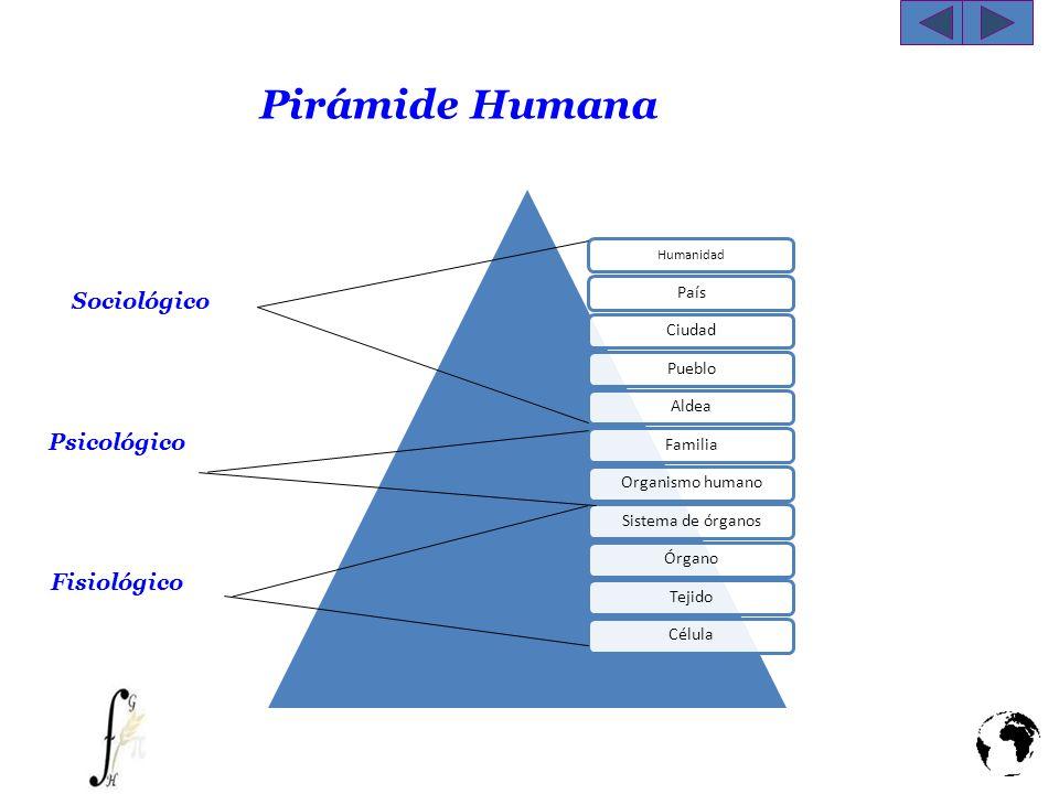 Pirámide Humana Humanidad PaísCiudadPuebloAldeaFamiliaOrganismo humanoSistema de órganosÓrganoTejidoCélula Fisiológico Sociológico Psicológico